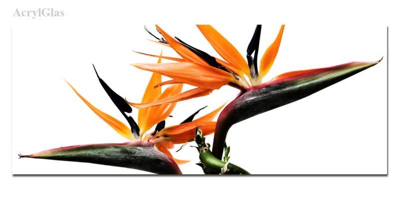 fleur orange exotique 40071. Black Bedroom Furniture Sets. Home Design Ideas