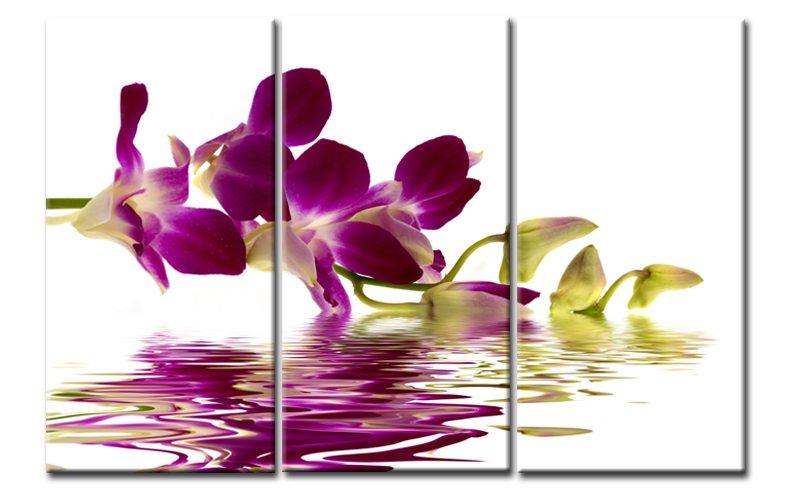 Orchidee lila