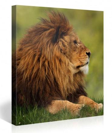 Leinwandbilder tiere online bestellen bilder 2 - Leinwandbilder bestellen ...