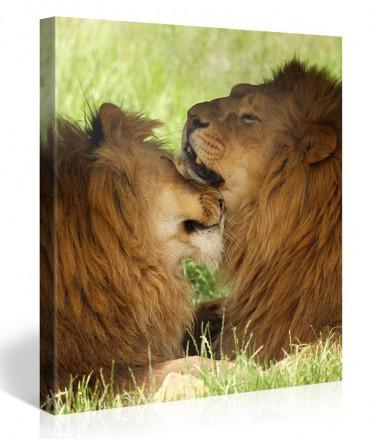 Leinwandbilder tiere online bestellen bilder - Leinwandbilder bestellen ...