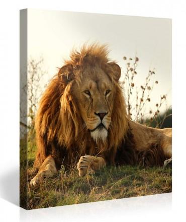 Leinwandbilder tiere online bestellen bilder 6 - Leinwandbilder bestellen ...