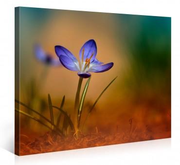 Leinwandbilder blumen online bestellen bilder 10 - Leinwandbilder bestellen ...