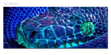 Schlange Blau