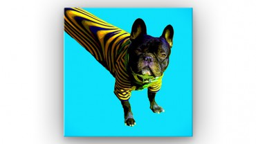 Bouledogue français Pop Art – Bild 1