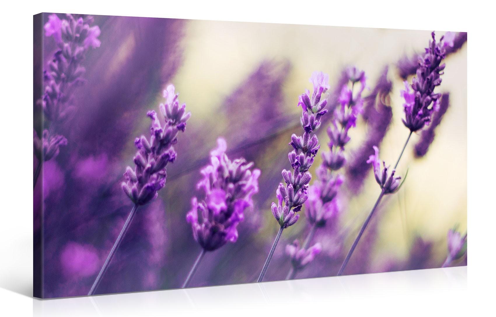 violetter lavendel 1006465. Black Bedroom Furniture Sets. Home Design Ideas